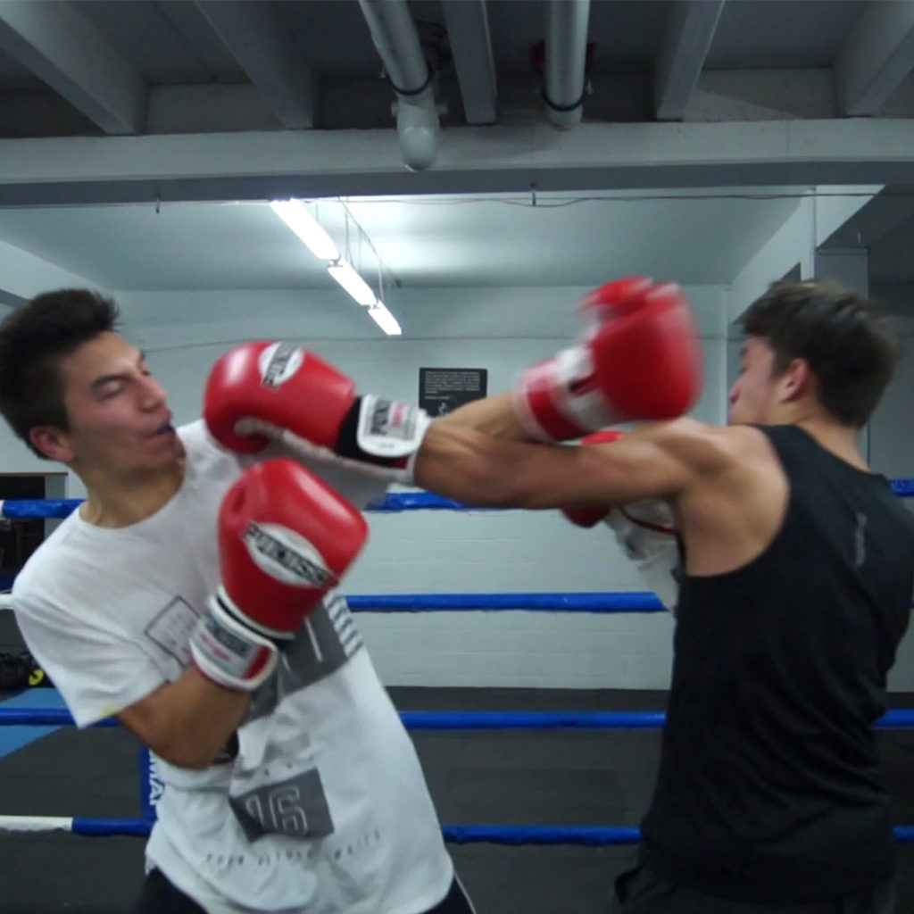 boxing sparring training auckland